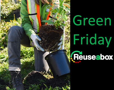 Tree Planting for Green Friday