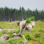 One Tree Planted. Two Million Tree Challenge promotes reforestation